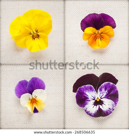 Pansy spring flowers. Viola tricolor heads collection on linen fabric background. Mothers day concept - stock photo