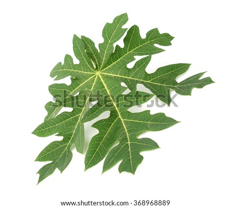Papaya leaf isolated on white