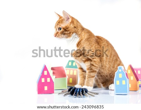 Paper house, keys and funny cat - stock photo