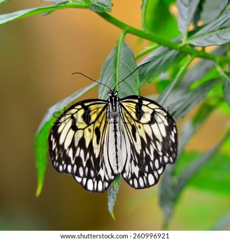 paper kite butterfly - stock photo