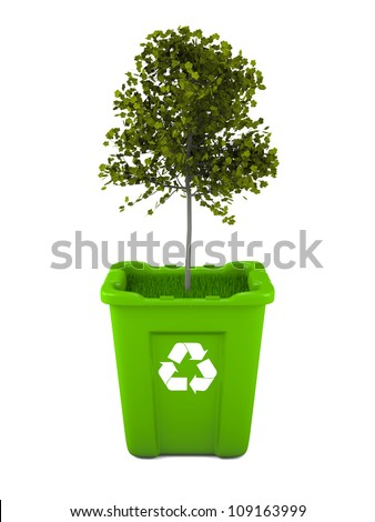 Paper recycling concept with Italian Maple tree growing from green recycle bin - stock photo
