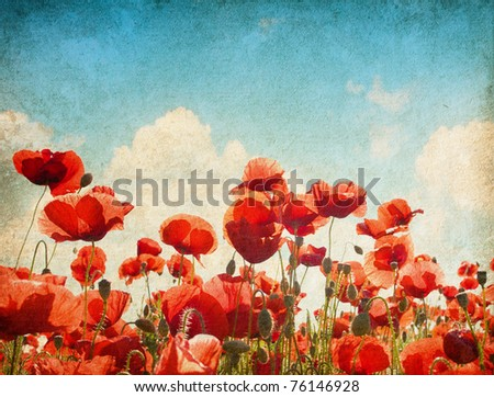 paper textures. Field of poppies - stock photo