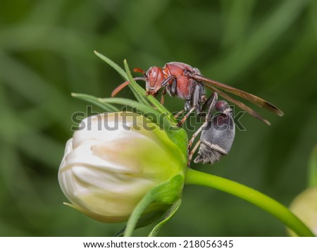 Paper Wasp - stock photo