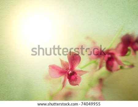 paper watercolor texture orchid with shallow dept of field against the sunlight; plenty of copyspace - stock photo