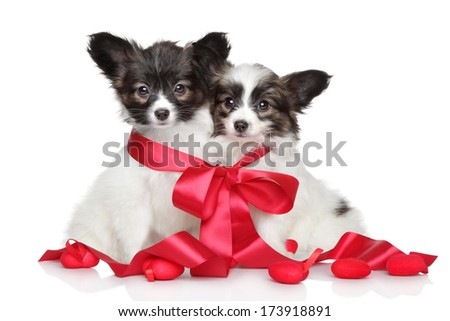 Papillon puppies associated red bow on white background