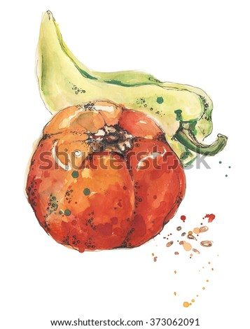 Paprika. Tomato. Watercolor illustrations of paprika and tomato on white background. Hand drawn vegetable. Food, logo, template. Vegetarian healthy food. Vegetable with watercolor splashes, stains.