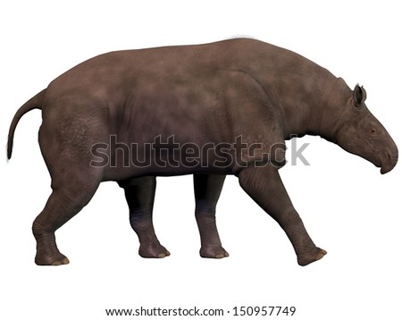 Paraceratherium on White - Paraceratherium also known as Indricotherium was a genus of gigantic hornless rhinocerus-like animal which was the largest land mammal ever known. - stock photo