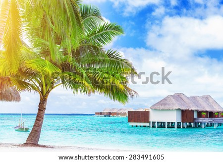 Paradise beach landscape, luxury hotel on an island, fresh big palm tree on the sea shore, amazing destination for exotic summer vacation, Indian Ocean, Maldives, Asia