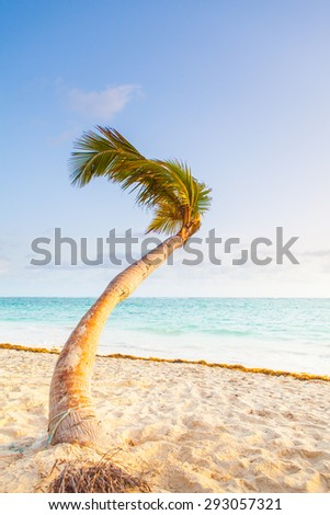 Paradise beach with single palm and water and white sand.