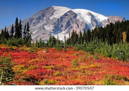 Paradise meadows covered with autumn colors at Mount Rainier national park - stock photo