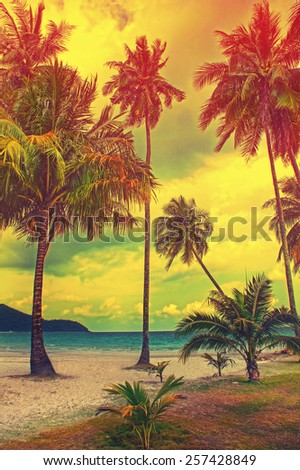 Paradise nature, palm tree on the tropical beach. Summer travel background with retro vintage instagram filter. - stock photo