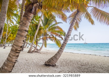 Paradise on earth, scenery of tropical beach on caribbean island Saona in Dominican Republic - stock photo