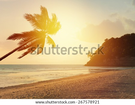 Paradise tropical beach background with coconut palm tree and sunset over the sea - stock photo