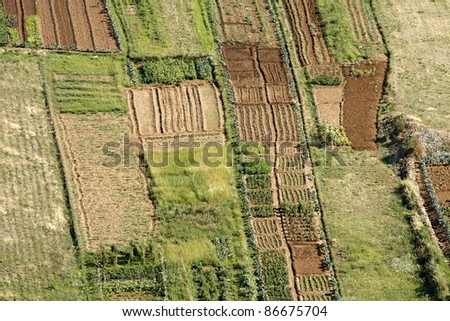 parcels of land with different cultures - stock photo