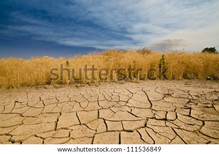 parched field against blue sky background