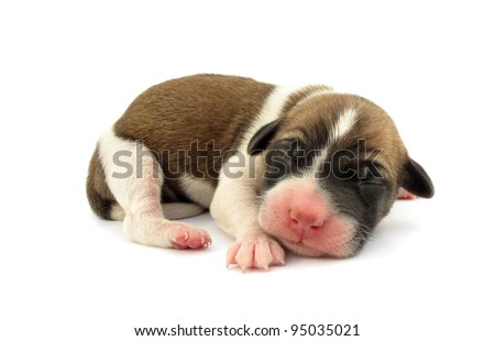 Pariah dog newborn puppy is sleeping - stock photo
