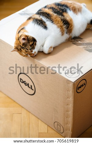 PARIS, FRANCE - AUG 6 2017: Cat sleeping on the new Dell Computer workstation cardboard box