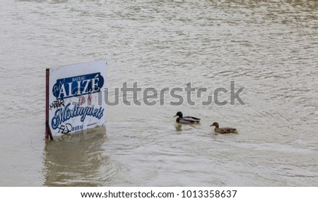 PARIS,FRANCE - January 29, 2018: Two ducks floating in the vicinity of a pole with an ad display on the Seine River that rose significantly, increasing the risk of flooding in Paris.