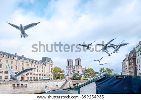Paris - Notre Dame - Seine, France in a beautifull autumn day. Seine river in the foreground with flying seagulls, cathedral in the background./Paris - Notre Dame - Seine, France - stock photo