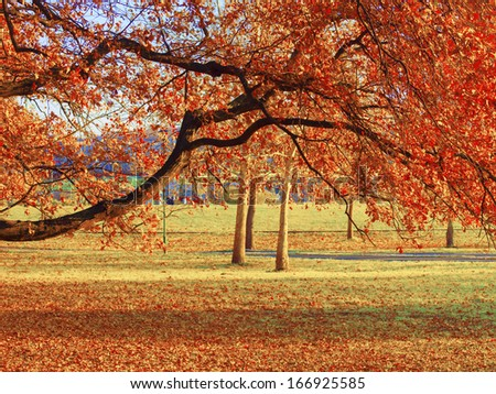 Park Ada Ciganlija in autumn, Belgrade, Serbia - stock photo