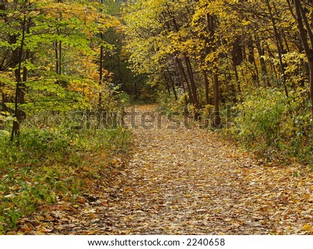 Park alley covered with leaves - stock photo