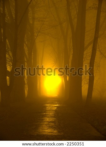 Park alley in the fog at night