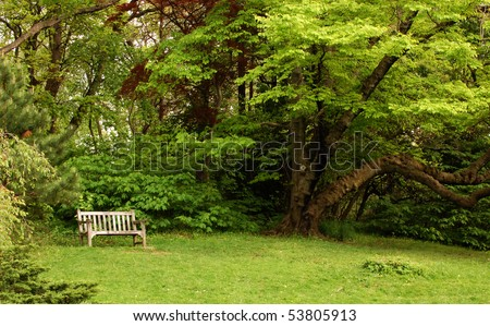 Park bench in grassy area with tree nearby and forest background
