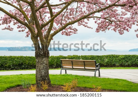 Park bench looking out to sea. Cherry tree in bloom in foreground. Copy space. - stock photo
