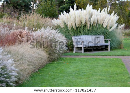 Park bench nestling in various grasses and pampas - stock photo