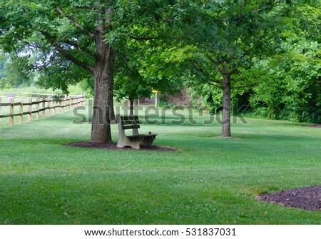 Park bench underneath the shade of the summer tree.