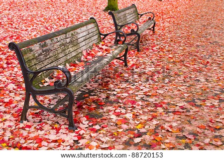Park Benches in the Fall at Portland Oregon Downtown Waterfront - stock photo