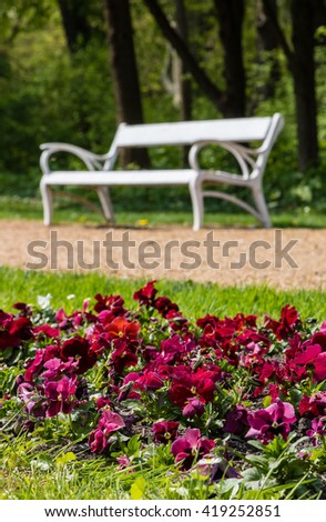 Park benches on side of tar footway and flower bed in lawn under shady trees - focused on flowers - stock photo