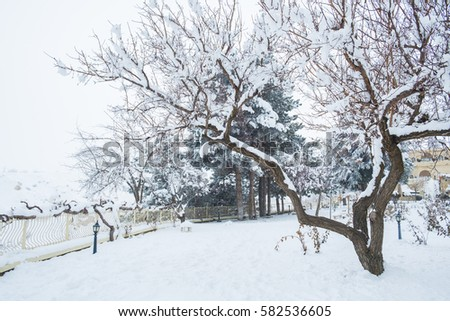 Park cover in snow with leafless tree
