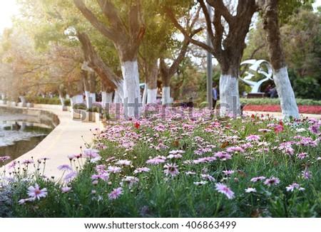 park flower bed   - stock photo