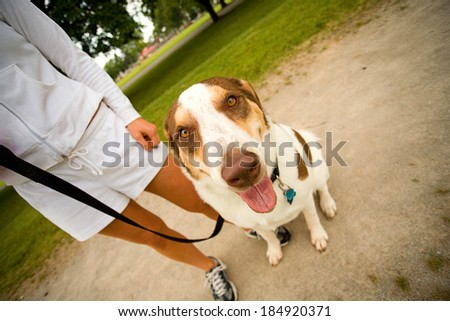 Park: Funny Dog Looks At Camera While Panting - stock photo