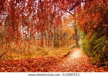 Park in Kromlau, Saxony, Germany. Amazing, colorful autumn background