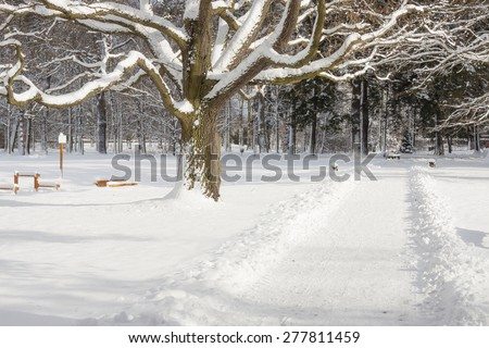Park in Swierklaniec (Poland) - winter landscape. - stock photo