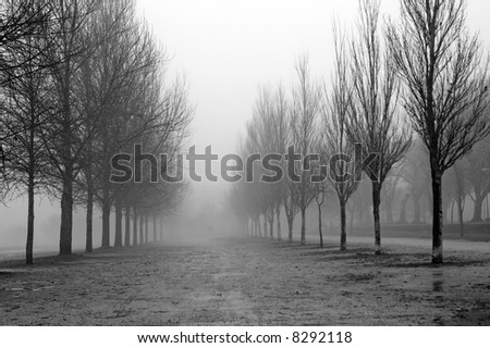 Park of Ponte de Lima in Portugal in a winter misty day - stock photo