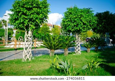 Park promenade, palm trees - stock photo