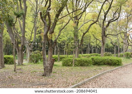 Park scenic with small path and leaves on ground in Osaka, Japan.
