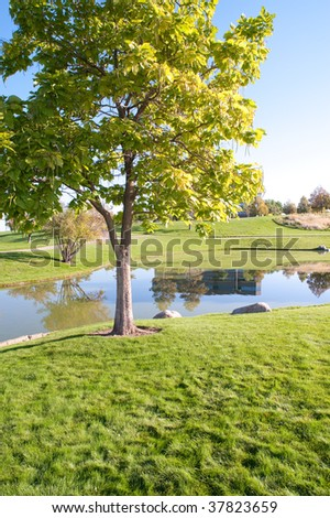Park setting showing trees, grass and reflections off of the water.