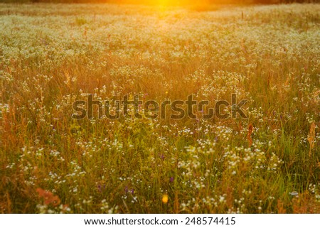 park, trees, meadow in bright sunlight