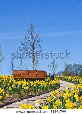 Park with benches and stone path throw narcissus