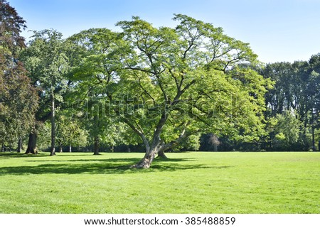 Park with green meadow and forest. Green meadow and blue sky. Summer scene.  - stock photo