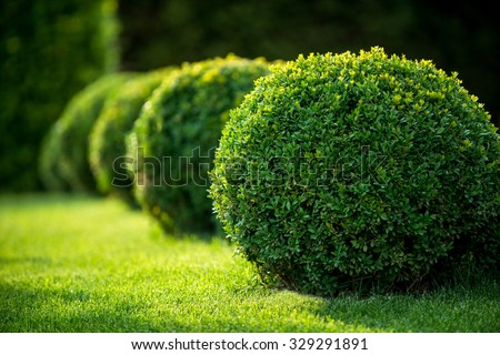 park with shrubs and green lawns, landscape design - stock photo