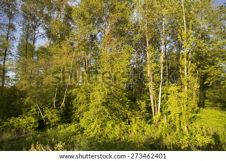 Park with trees and bushes in the spring - stock photo