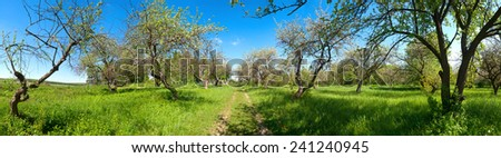 park with trees panorama - stock photo