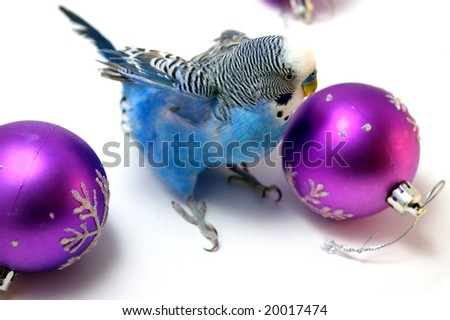 Parrot and fir tree new year's balls - stock photo