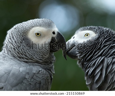 parrot bird sitting on the perch - stock photo