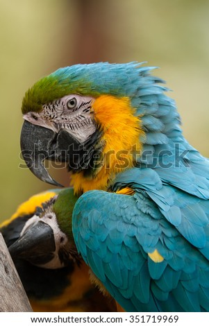 Parrot close up look.
